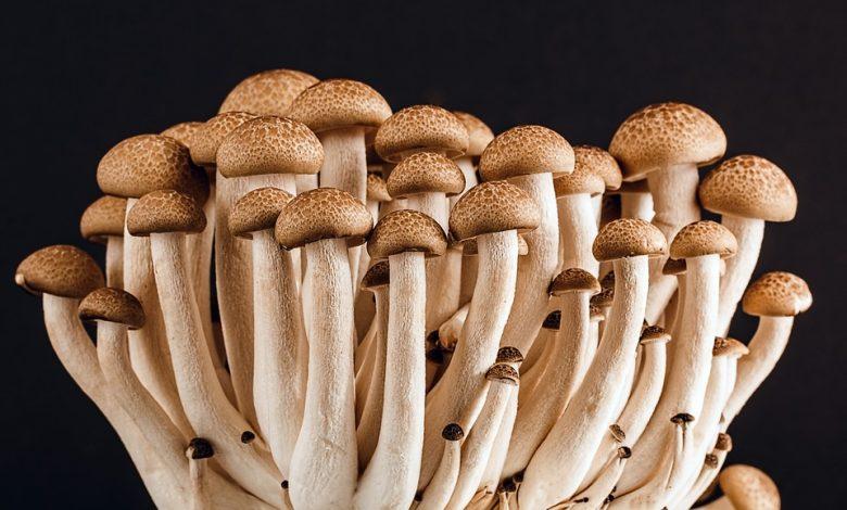 Photo of The Mushroom Boom: Fungi offers Versatility and Health Benefits
