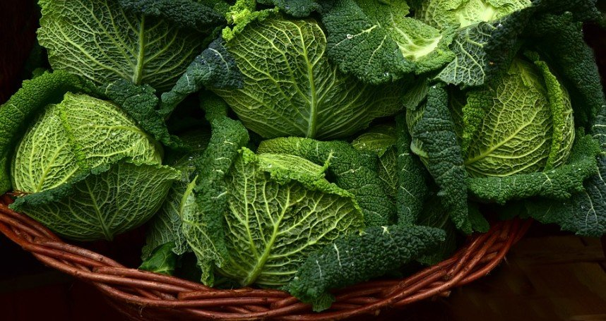 cabbages in a basket