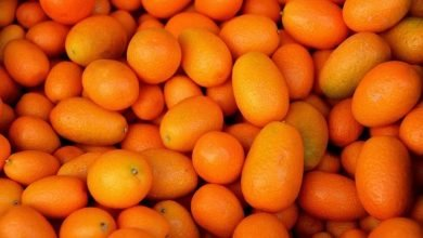Photo of A Guide to the Types and Benefits of Kumquat